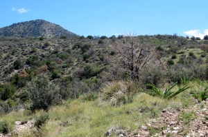 bench-and-rise topology of Ortega Mountain
