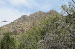 """""""Trifecta"""", the highland separating Turkey Creek and Gila River"""