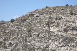 Chihuahuan vegetation arrayed in garden-like lines near rim