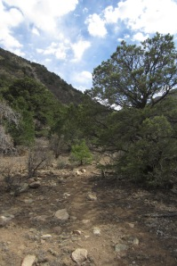 Trees and shrub beside the point where the trail leaves the old ranch road for the canyon bed.