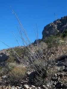 02 Ocotillo near ridge