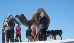 A crowd surrounding a dromedary camel near the trailhead.