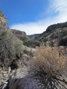 View into North Branch, South Marble Creek Canyon from the bed of South Marble Creek Canyon