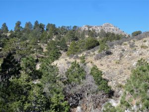 Meadowed terrain and view of Guadalupe summit