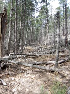 First stretch of blowdown on Johnnie Canyon trail.