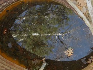 Aspen reflection on surface of Nave spring