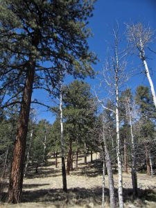 Stately firs and open meadows on Myers cabin col.