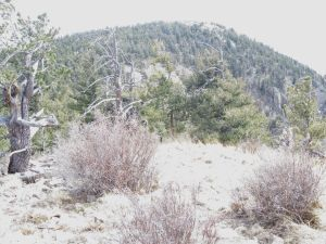 View to Vicks Peak from the top of Point 10100