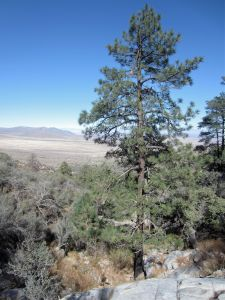 As distances begin to appear between bushes, views to the Tularosa open up.