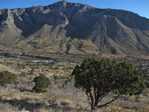 View of north wall of Pine Canyon from canyon floor