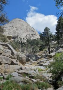 View up slab canyon, past pines, to summit of Sugarloaf.
