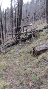 Burn debris piled five feet high on trail.
