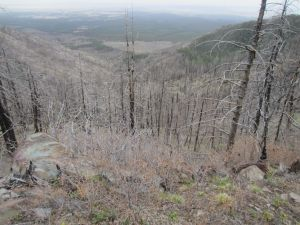 View from Kayser Mill Trail down burned slopes.