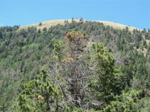 White Horse Hill on crest of Sierra Blanca Mountains