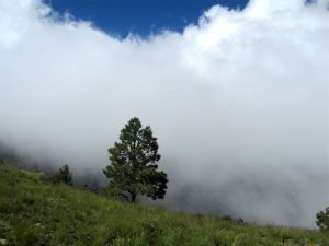 Cloud shrouded crest