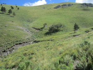 Open grasslands surrounding Bonito Seep