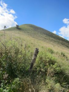 View to White Horse HIll summit from the east side.
