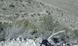 View into Hadley Canyon from CR-Ao03. The long, wavering line of exposed bedrock is a common sight on the east side of the Caballo Range.