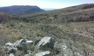 Scorched terrain below Timber Mountain and view to distant Bushy Mountain.