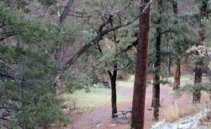 Railroad Canyon Campground, with tables and fire rings (viewed from NM-152)