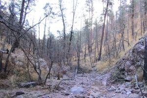 U-shaped abrasion through hard rock, just before trail above waterfalls.