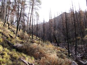 Burn extending to canyon bottom.
