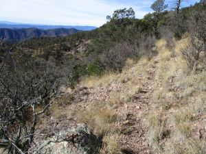 Intersection with obvious trail, looking west into the Gila National Forest