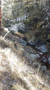 A bit of trail (extreme left of picture) and typical view of the gently ascending terrain of Gallinas Canyon