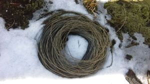 Artifacts of the west - a coil of wire abandoned on the crest of the Black Range.