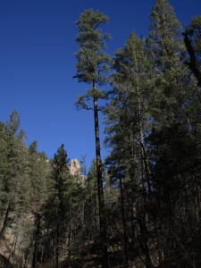 Tall trees, sunlit hoodoos and steep sided canyons in the entrance to West Railroad Canyon.