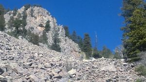Cliff above boulder field, descending to the right. At the end of this decent is a snag, dead at its to but  retaining a green skirt of living branches at its base.
