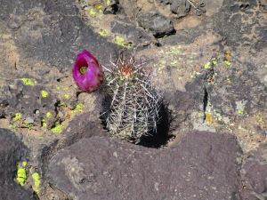 Cactus growing on a