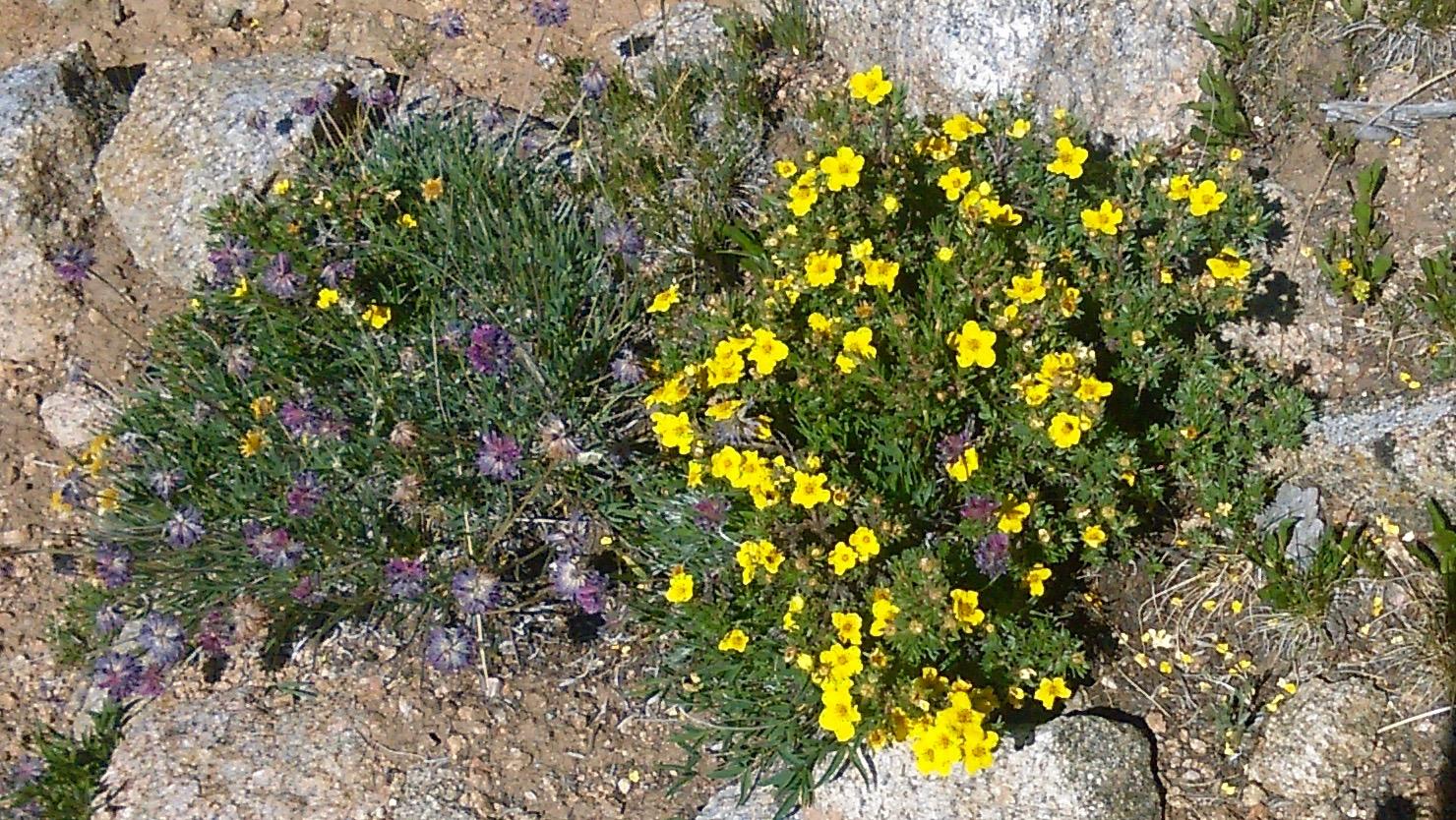 07 High altitude flower show
