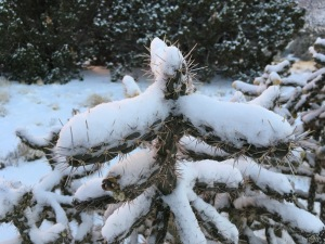 02-frosted-stick-cholla