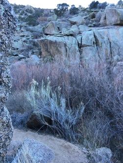 08 boulder-dodging trail