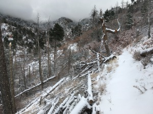 Forest devastation in upper canyon