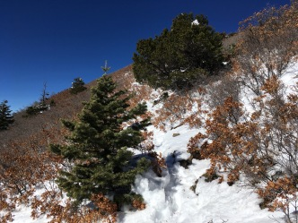 12 Xmas tree where boots go up to S Sandia