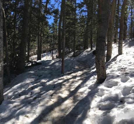 22 boot trail through woods near summit