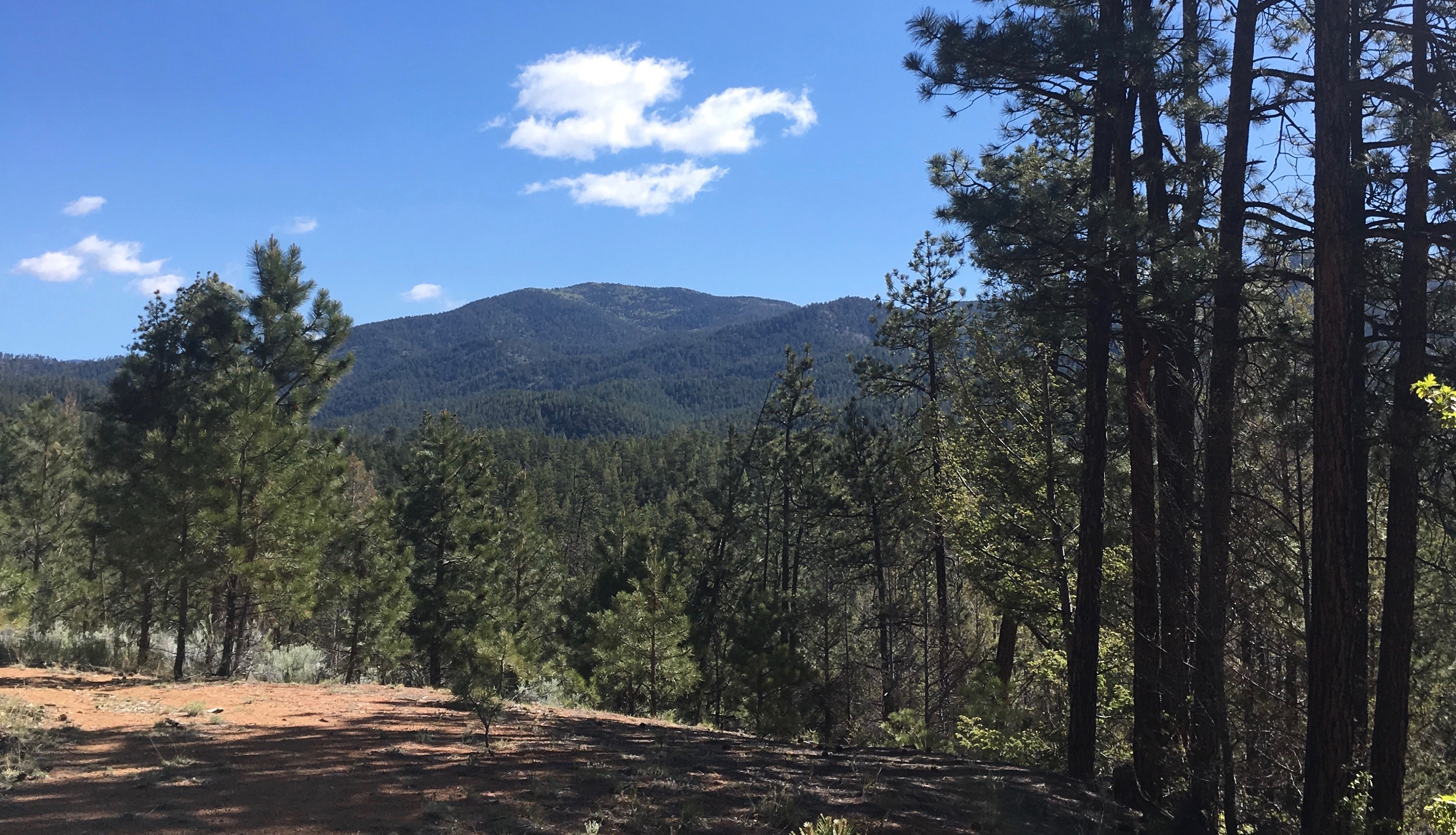 2017 05 28 Glorieta Baldy Santa Fe Mts New Mexico Meanders
