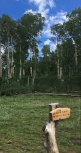 05 Beatty's Trail - Jack's Creek Junction