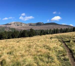 Montane grasslands, burn-scarred forest, high peaks and New Mexican skies.