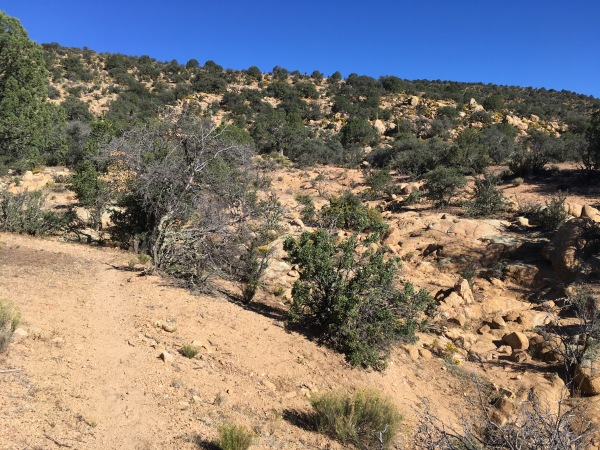 04 Broad height of land above trailhead