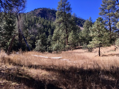 01 Meadow in Buckhead Canyon Confluence.jpg