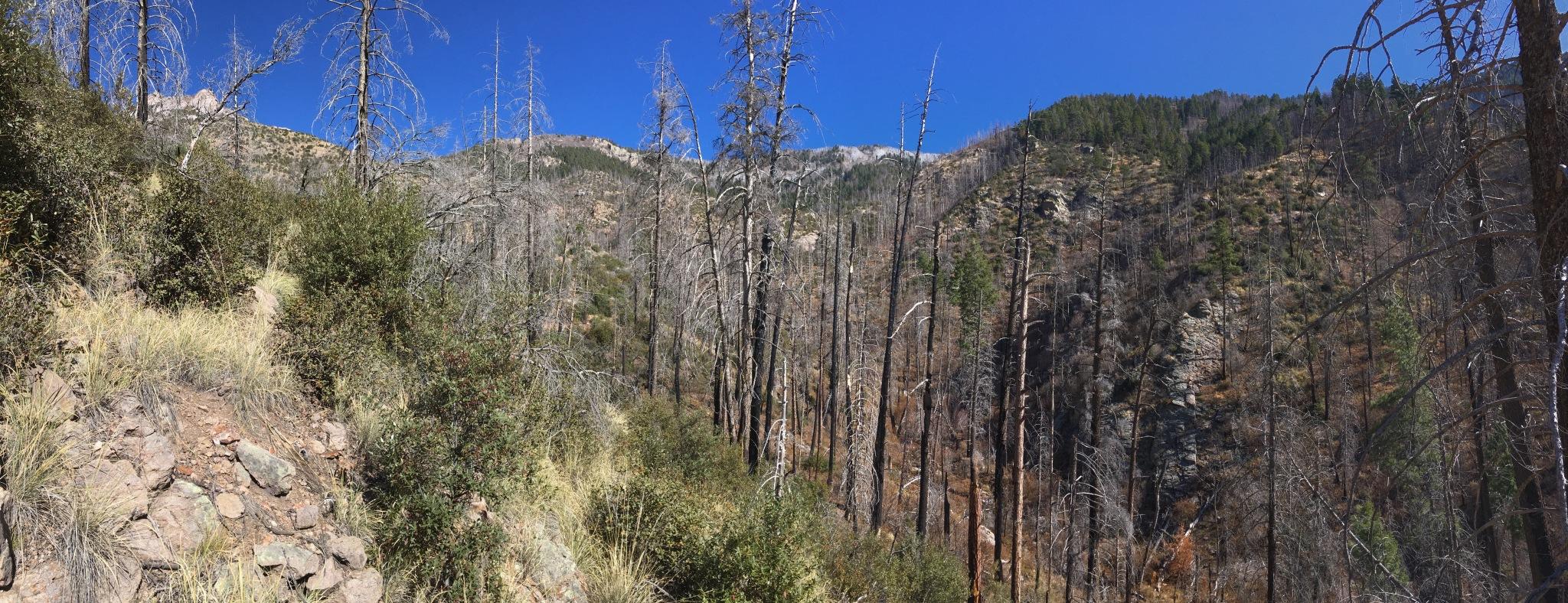 08 Mogollon Ridge from turnback point