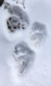 11 Bear Prints